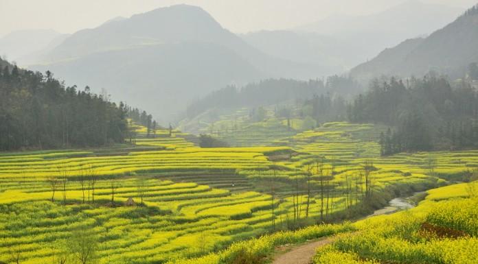 China investește 450 de miliarde de dolari în agricultură