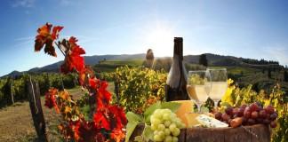 Producția de vin