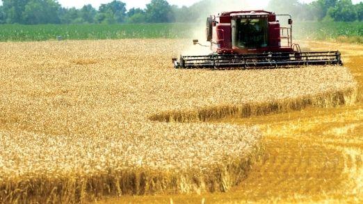 Agenţia de Plăţi pentru Agricultură informează că cele mai mari culturi de cereale bio din România aparţin unor investitori străini
