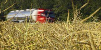 Analiză bursa cerealelor AgroGo: Rapița