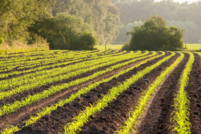 regiuni agricultura